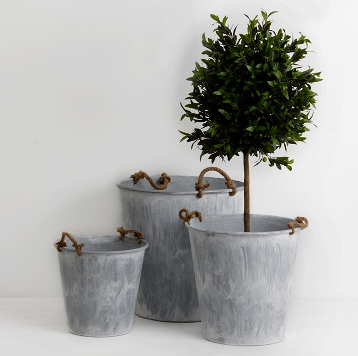 Galvanized Buckets And Topiaries