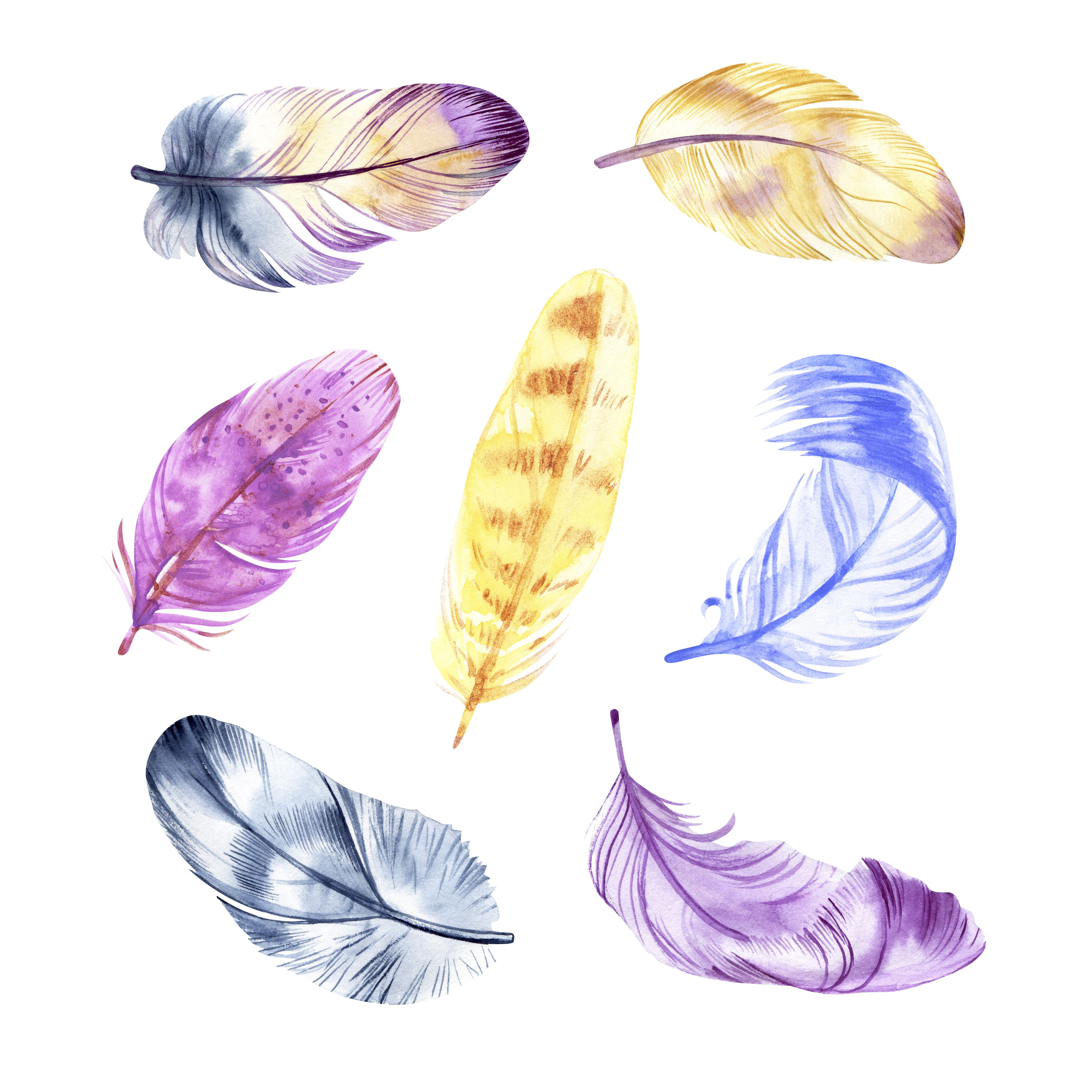 Watercolor Feathers Feather Clip Art Nature clipart Forest Clip Art Wild Animals Fauna Clipart Animal Art