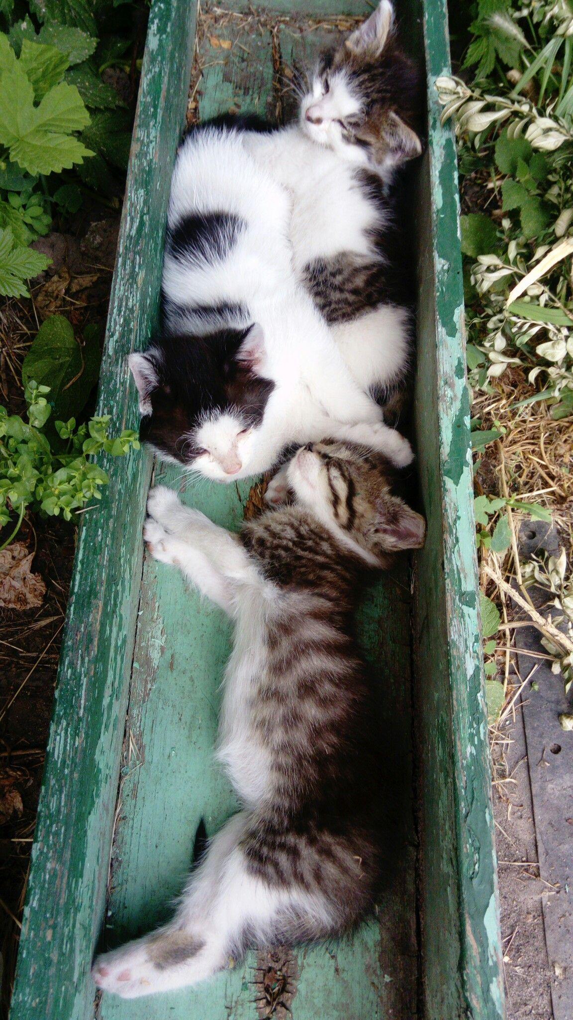 Spryatalis Pretty Cats Kittens Cutest