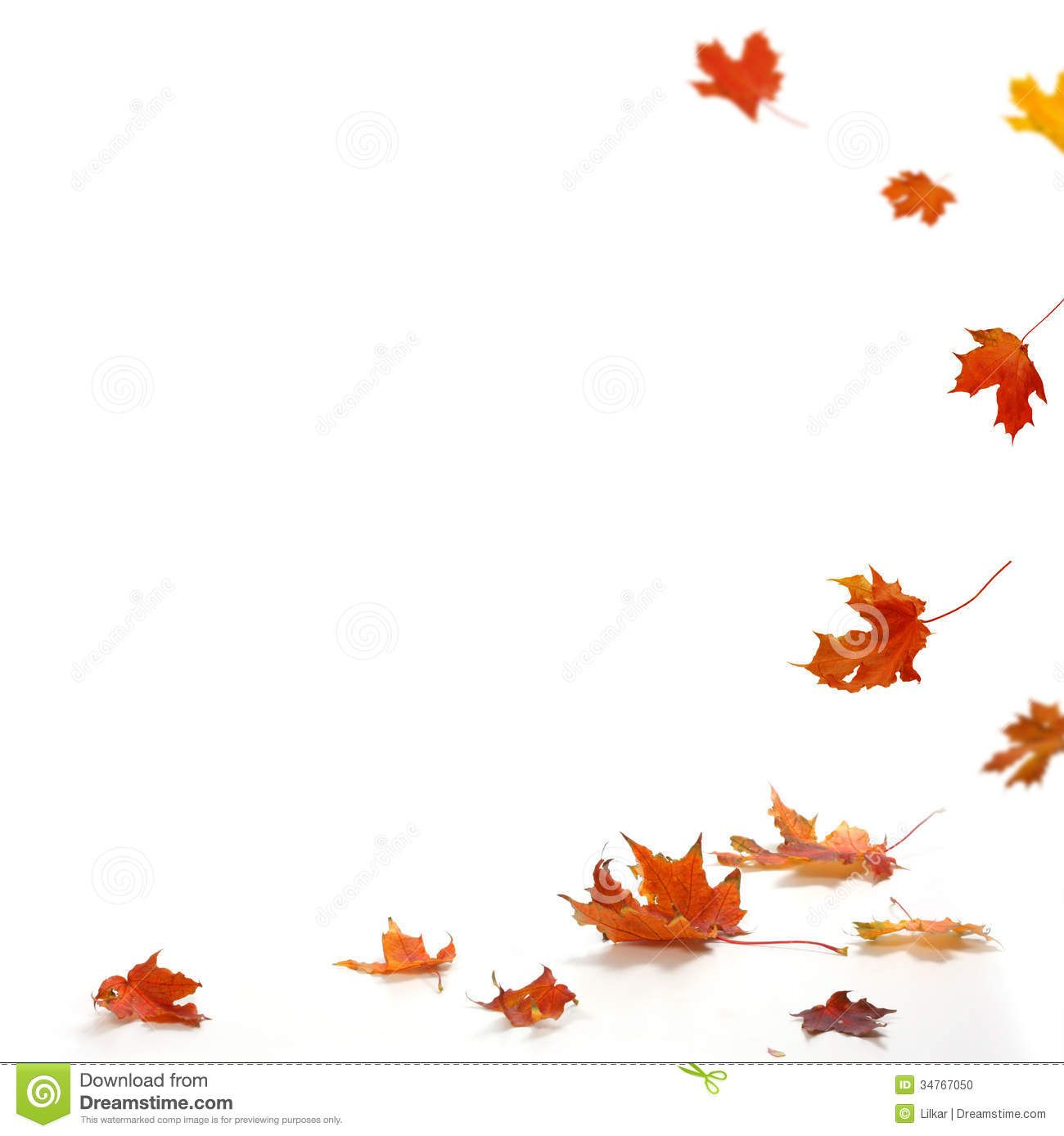 maple leaves falling down - Cerca con Google | Leaves and ...