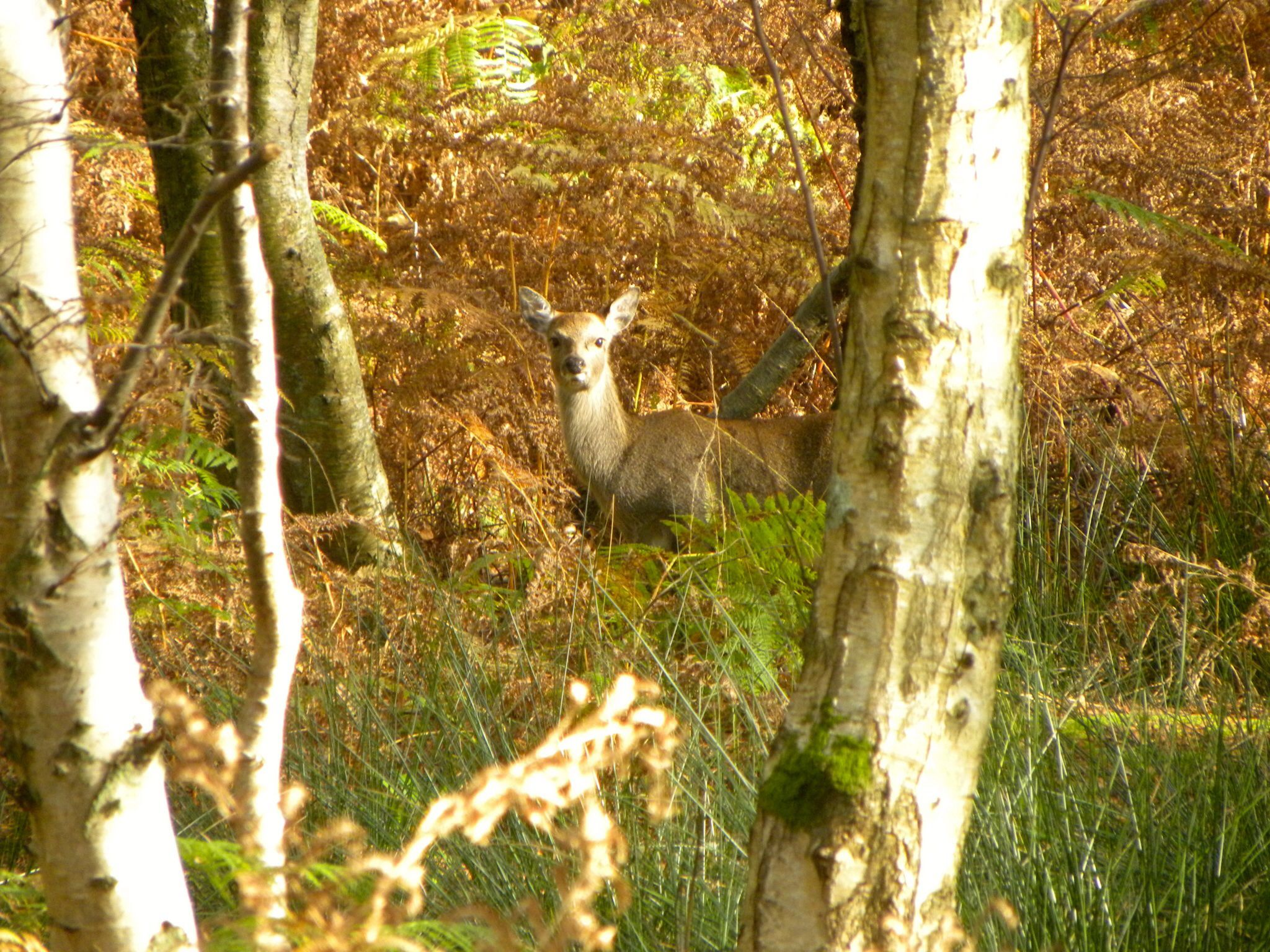 Autumn at Arne Nature Reserve, Purbeck, Dorset. England