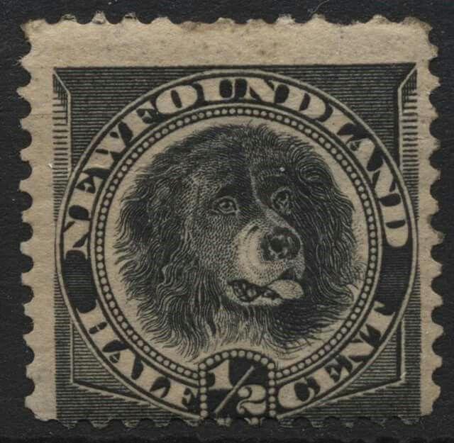 Newfoundland Half Cent Stamp 1894