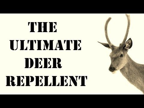 Natural deer repellent best repellent for getting rid of - How to keep deer out of garden home remedies ...