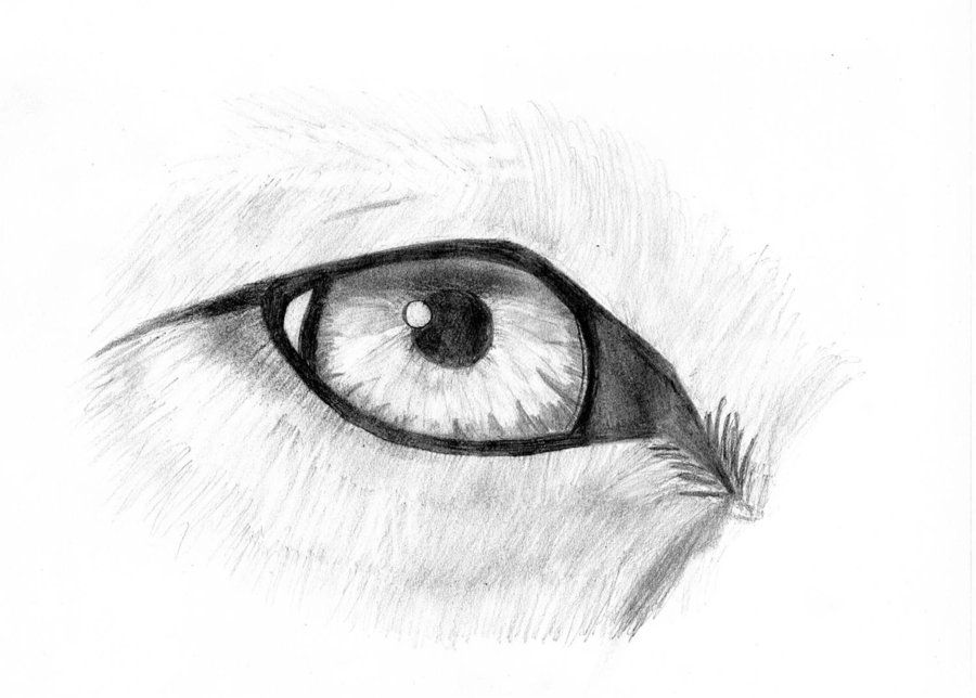 Wolf eye sketch by blackwarrior335iantart on deviantart wolf eye sketch by blackwarrior335iantart on deviantart ccuart Image collections