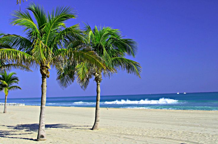 Palm Trees on Fort Lauderdale Beach. Request a Quote today at mygolfconcierge.net or call (407) 656-1655! #vacation #travel #golf #spa #girlfriend #getaway