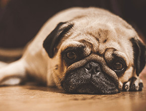 Find cute puppy dog pictures to add to your PC wallpaper.