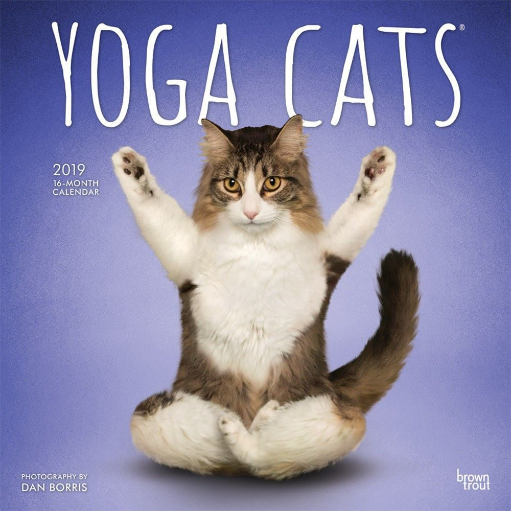 Yoga Cats 2019 12 X 12 Inch Monthly Square Wall Calendar Animals Humor Cat Isbn 978 1 4650 7535 2 Cat Yoga Cats Cat Having Kittens
