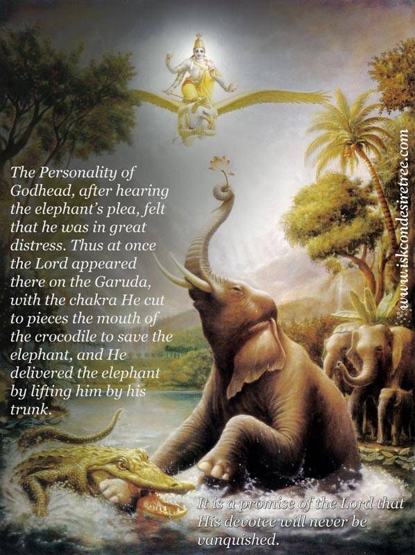 The Lord Delivering The Elephant For Full Quote Go To Http