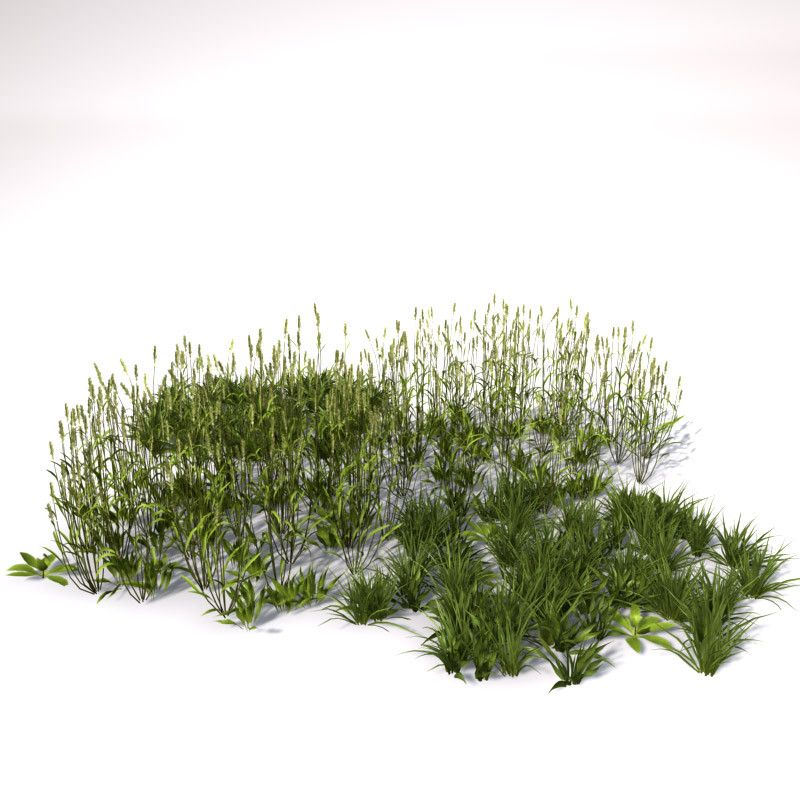 3d Grass Natural Model 3d Model Render Pinterest