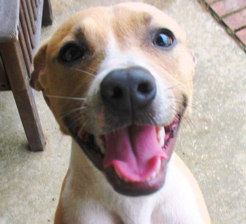 Adopt Felicity on (With images) Dog adoption, Italian