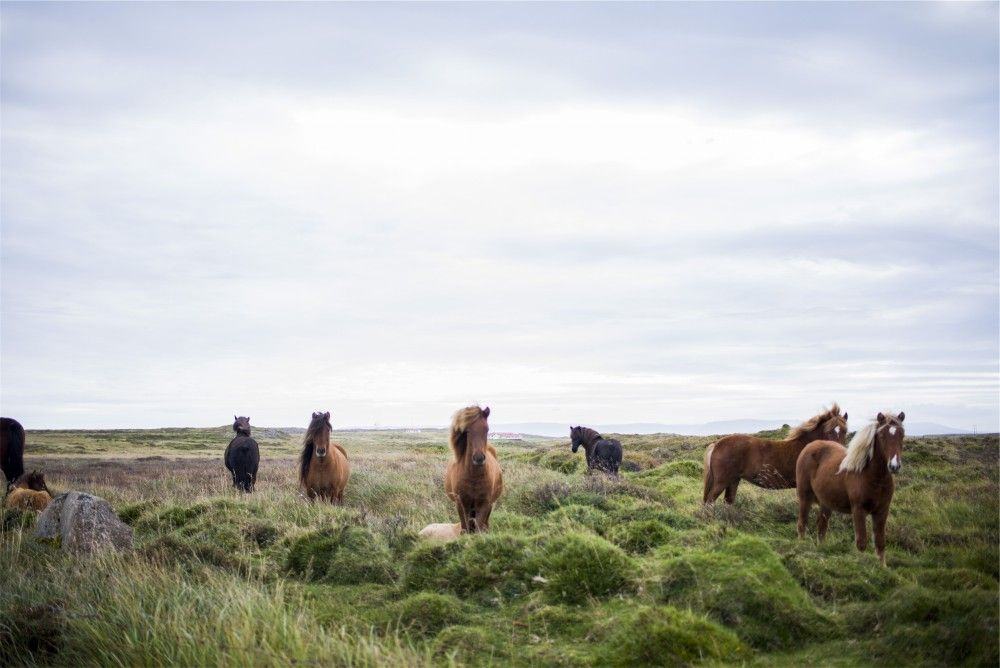 Public Domain Images Brown Horses Green Field Blue Sky
