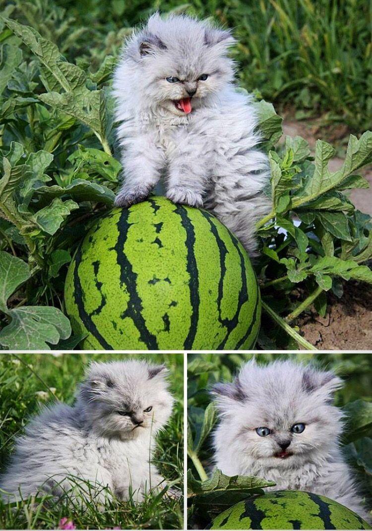 Pin von Katy Johnston auf Meow Meows Ausgestopftes tier