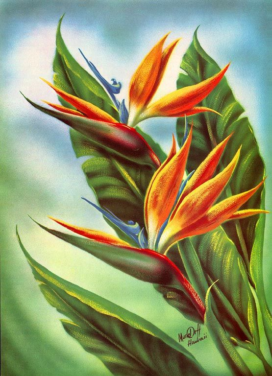Bird Of Paradise Ed Mundorff Vintage Hawaiian Art Hawaii Art Flower Painting Flower Art