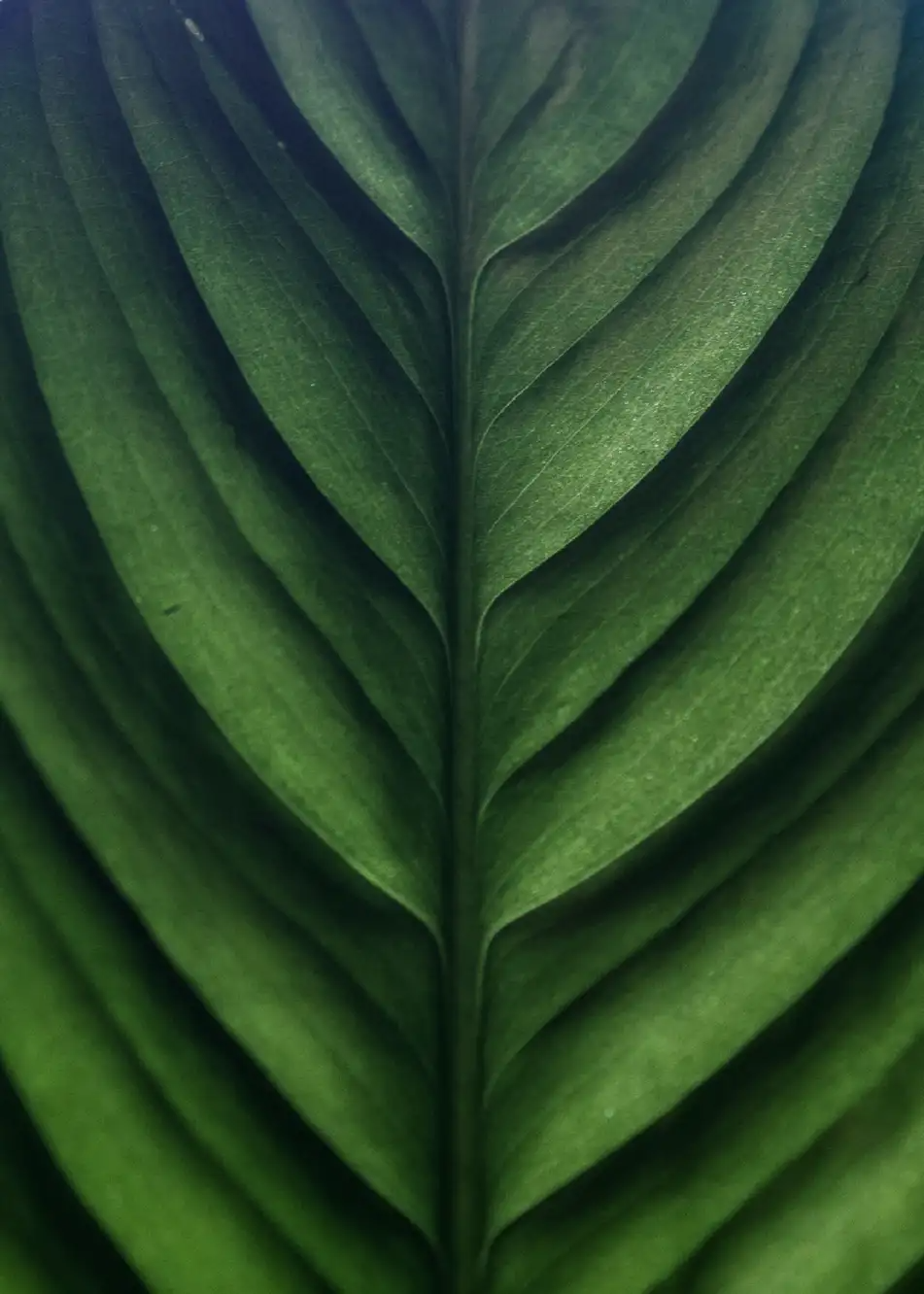 Fill The Frame A Simple Way To Improve Your Photographic Compositions Cool Backgrounds For Iphone Leaf Texture Black Wallpapers Tumblr