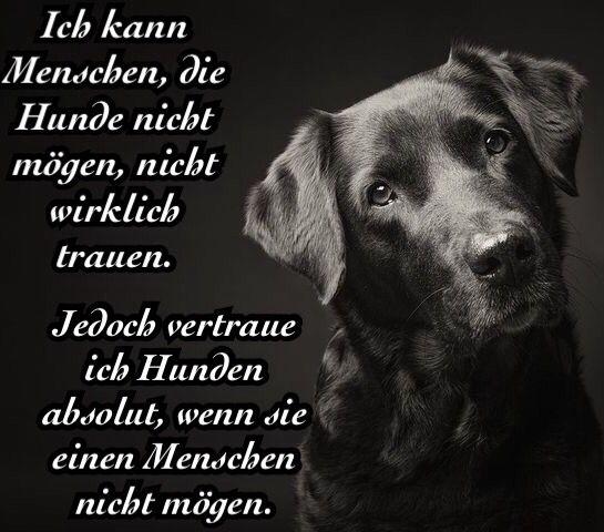 Zitat Hund