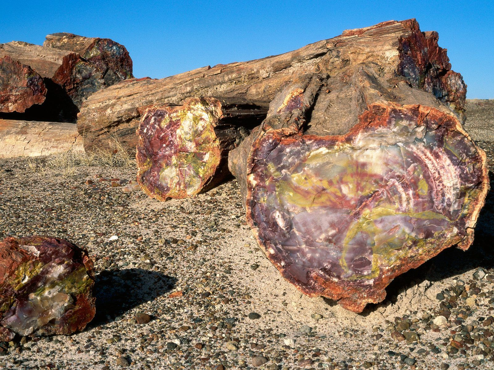 The trail of the anciente grand circle part 2 petrified earth indians of arizona petrified forest national park sciox Choice Image