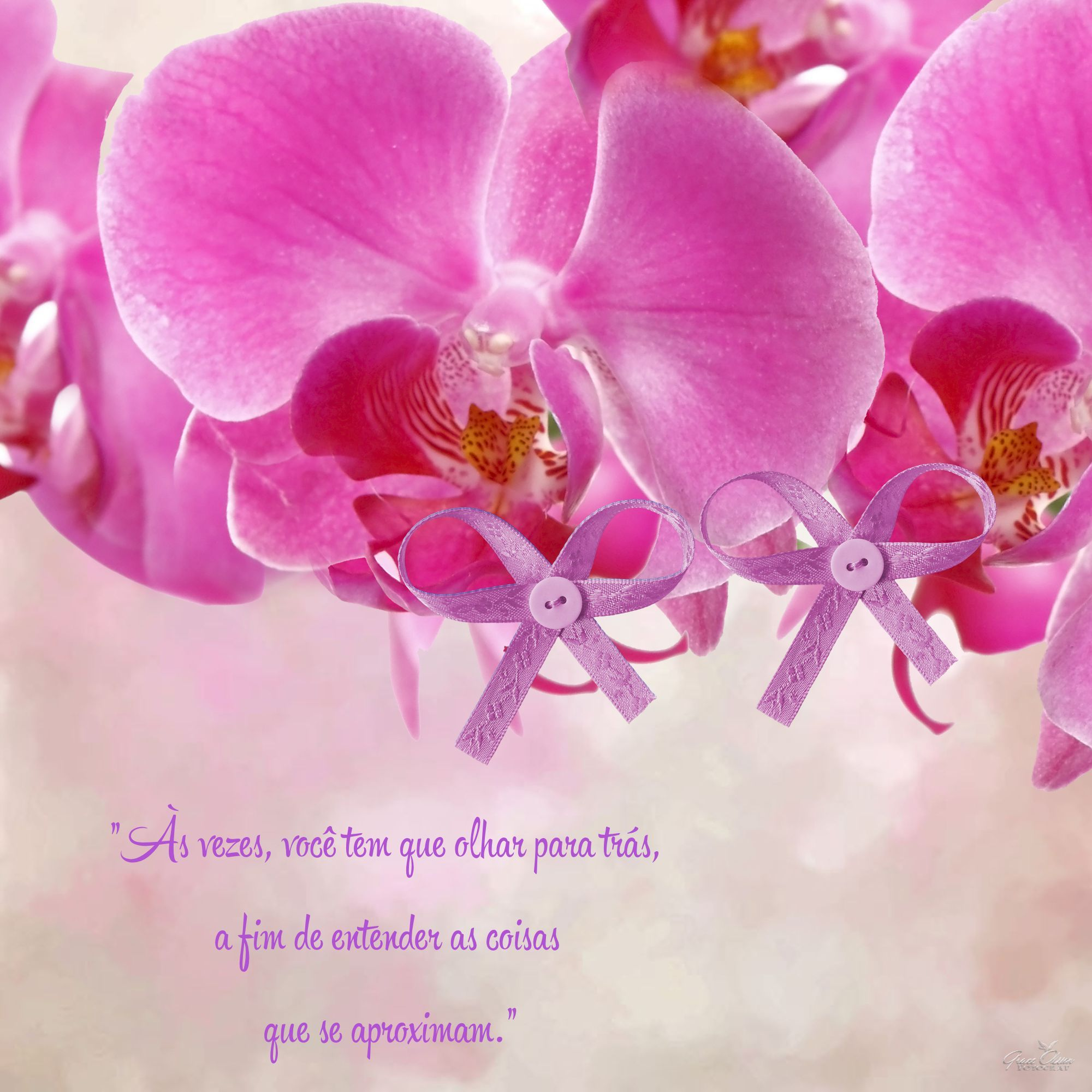 ORCHIDS, ORQUIDEAS, QUOTES, WORD ARTS