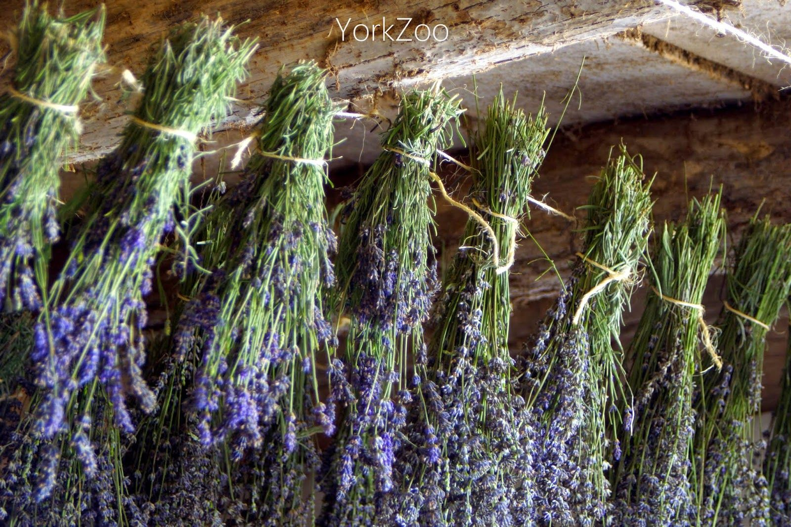 York Zoo-How May I Help You? blog. #lavender #lavenderharvest #barn #lavenderdryinginoldbarn