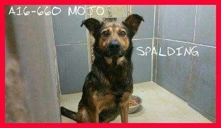 Griffin Ga Https M Facebook Com Spalding County Animal Shelter