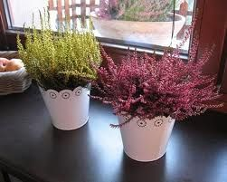 Wrzosy Plants Flowers Wedding