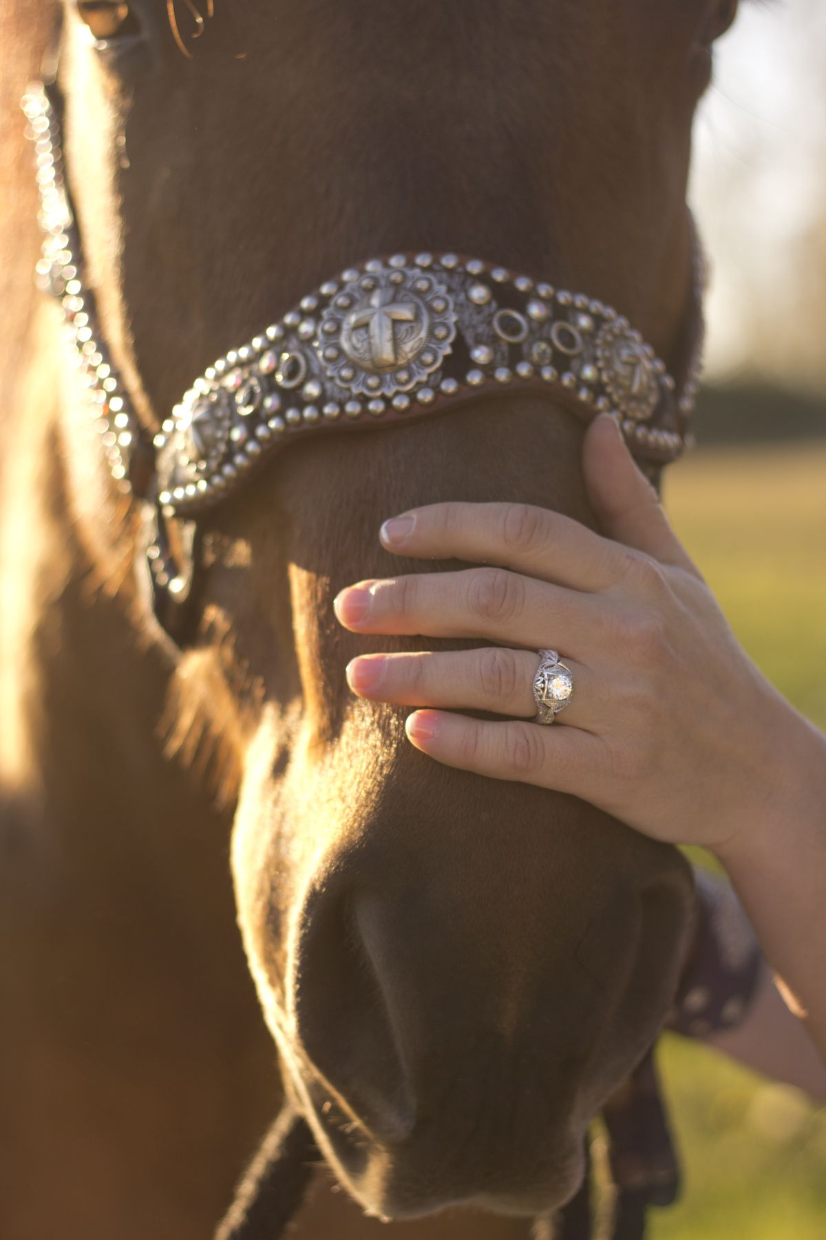 This is supposed to show off the ring but i LOVE this halter! where can i buy this halter!!!