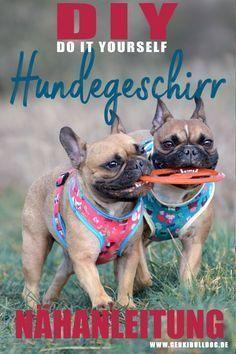 Photo of Instrucciones: Coser arnés suave para perros usted mismo