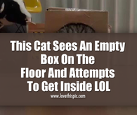 This Cat Sees An Empty Box On The Floor And Attempts To Get Inside LOL