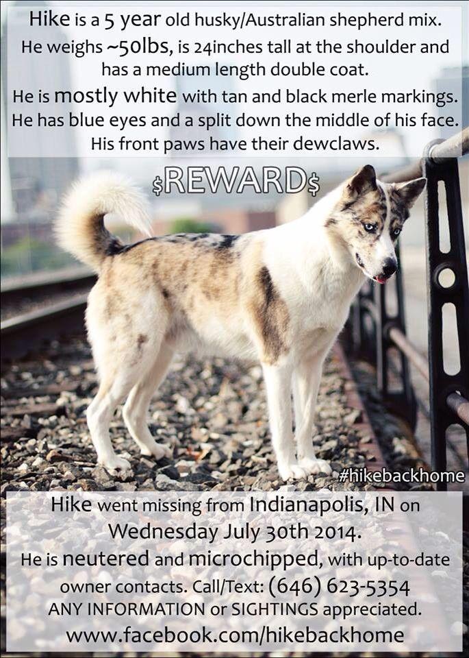 Lostdog 73014 Indianapolis IN Losing a dog, Husky
