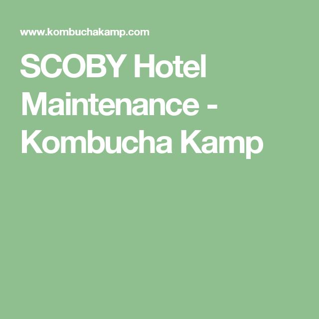 SCOBY Hotel Maintenance - Kombucha Kamp