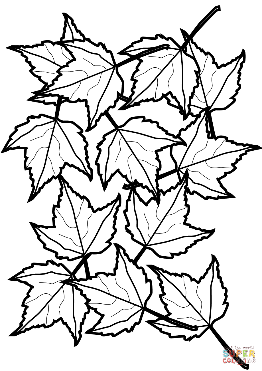 - Autumn Maple Leaves Coloring Page Free Printable Coloring Pages