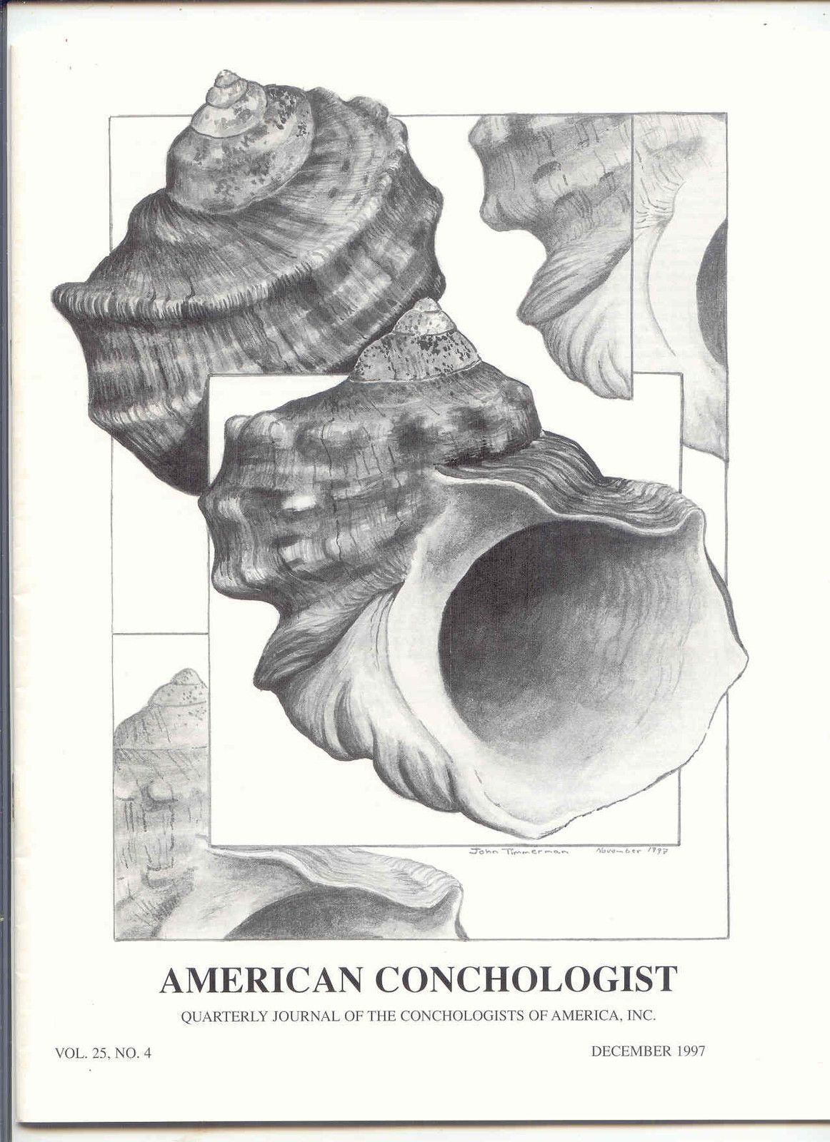 American Conchologist 12 97 With Drawing Of Turbo By John