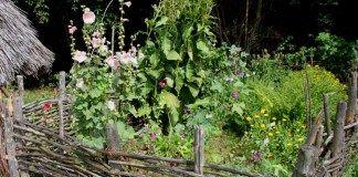 La permaculture : Un jardin potager sans entretien ! | Terrasse ou ...