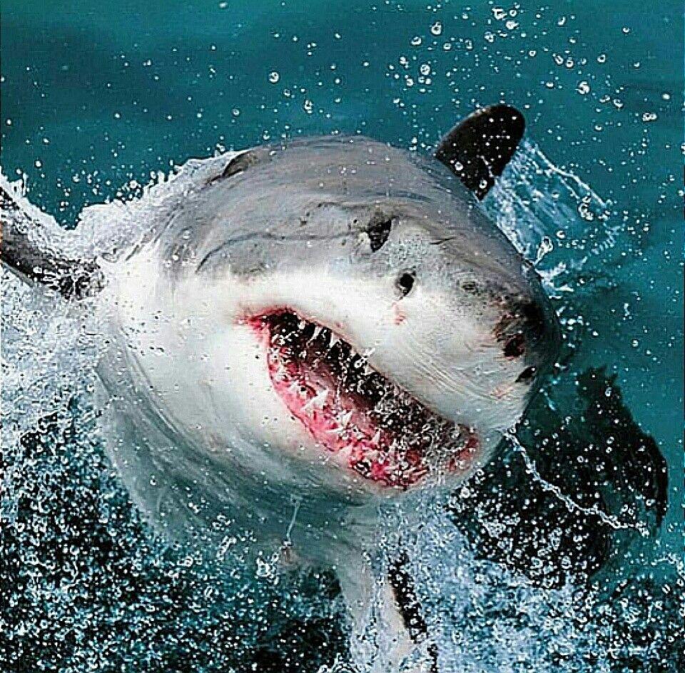 его тематичные картинки про акул действительно