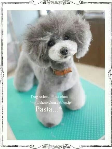Adorable Cute Dogs Dog Stuff Pinterest Poodle Dog And
