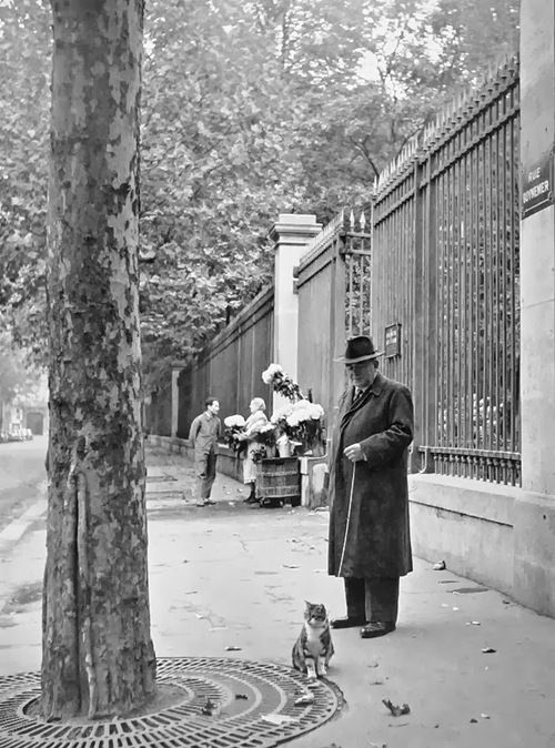 Vieil homme promenant son chat en laisse - Rue Guynemer, Paris, années 1950 - photo de Izis Bidermanas