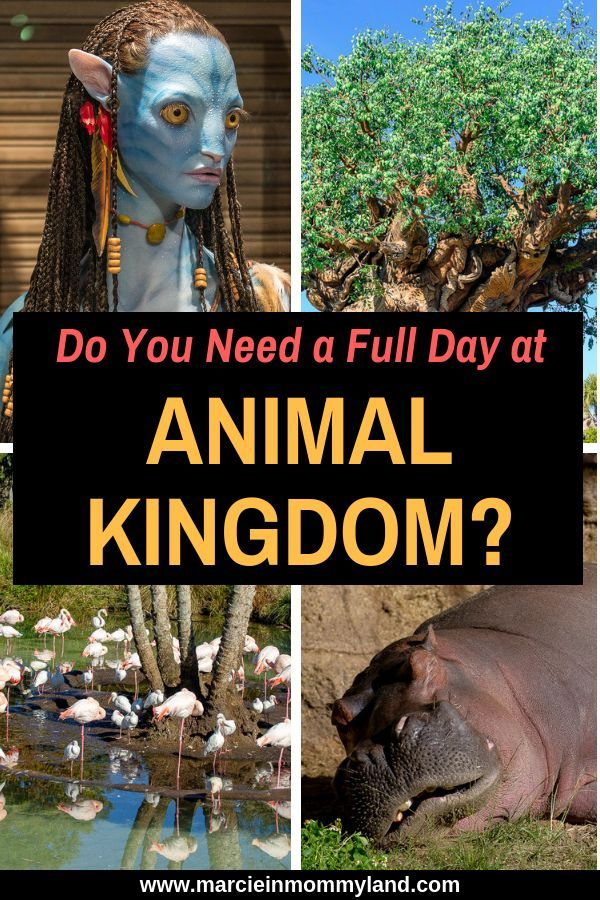 Disney Animal Kingdom Park with Kids #animalkingdom