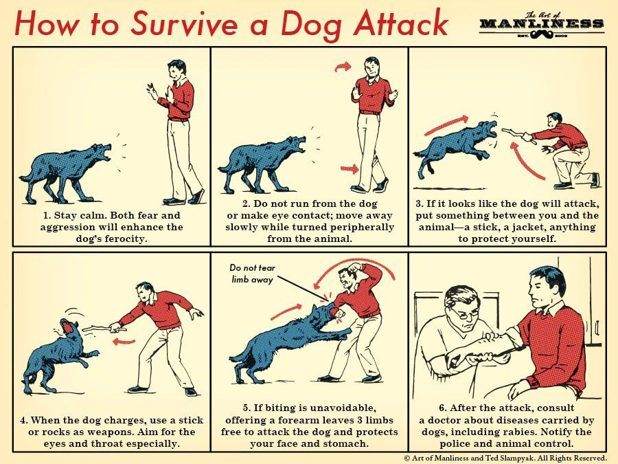 How to Survive a Dog Attack  Do you have any tips to add?