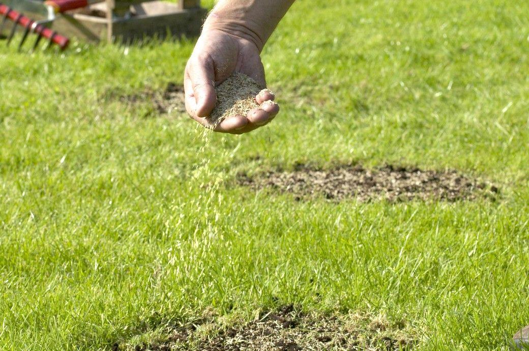 Rasen Nachsaen Und Lucken Schliessen Rasen Nachsaen Rasen Unkraut Im Rasen