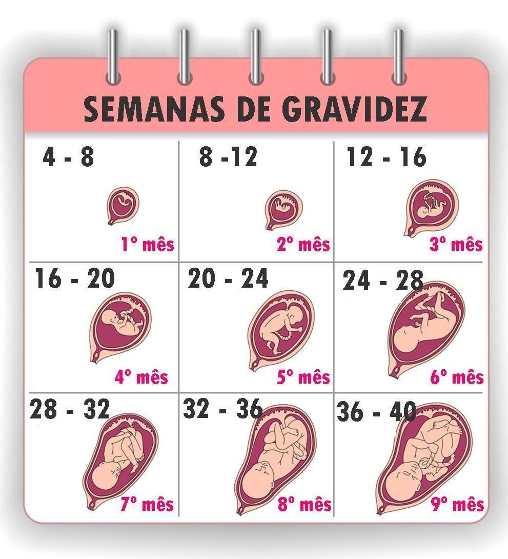 Tudo Sobre As Semanas De Gestacao Meses De Gravidez Gravidez