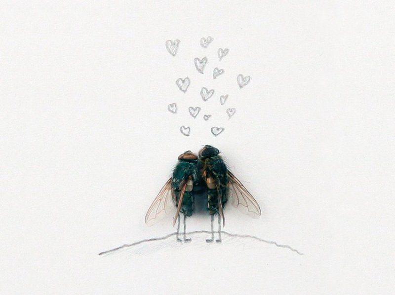 буду рисунок с мухами новочеркасске установят памятник