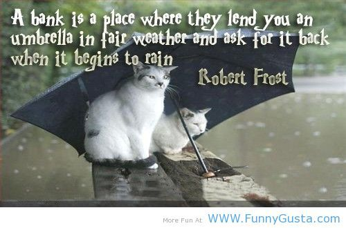 Funny Sayings With Cats Cute Cats Rains Funny Quotes Funny