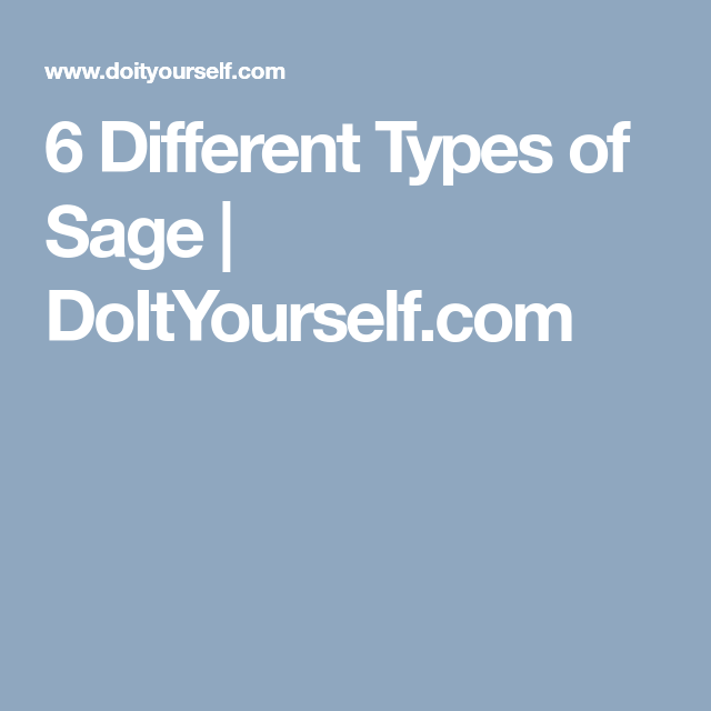6 Different Types of Sage | DoItYourself com | herb-sage | Sage