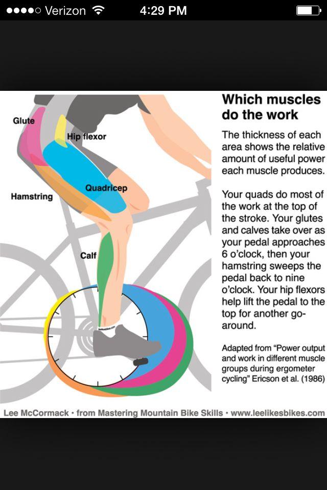 Muscles That A Bike Works Cycling Muscles Biking Workout