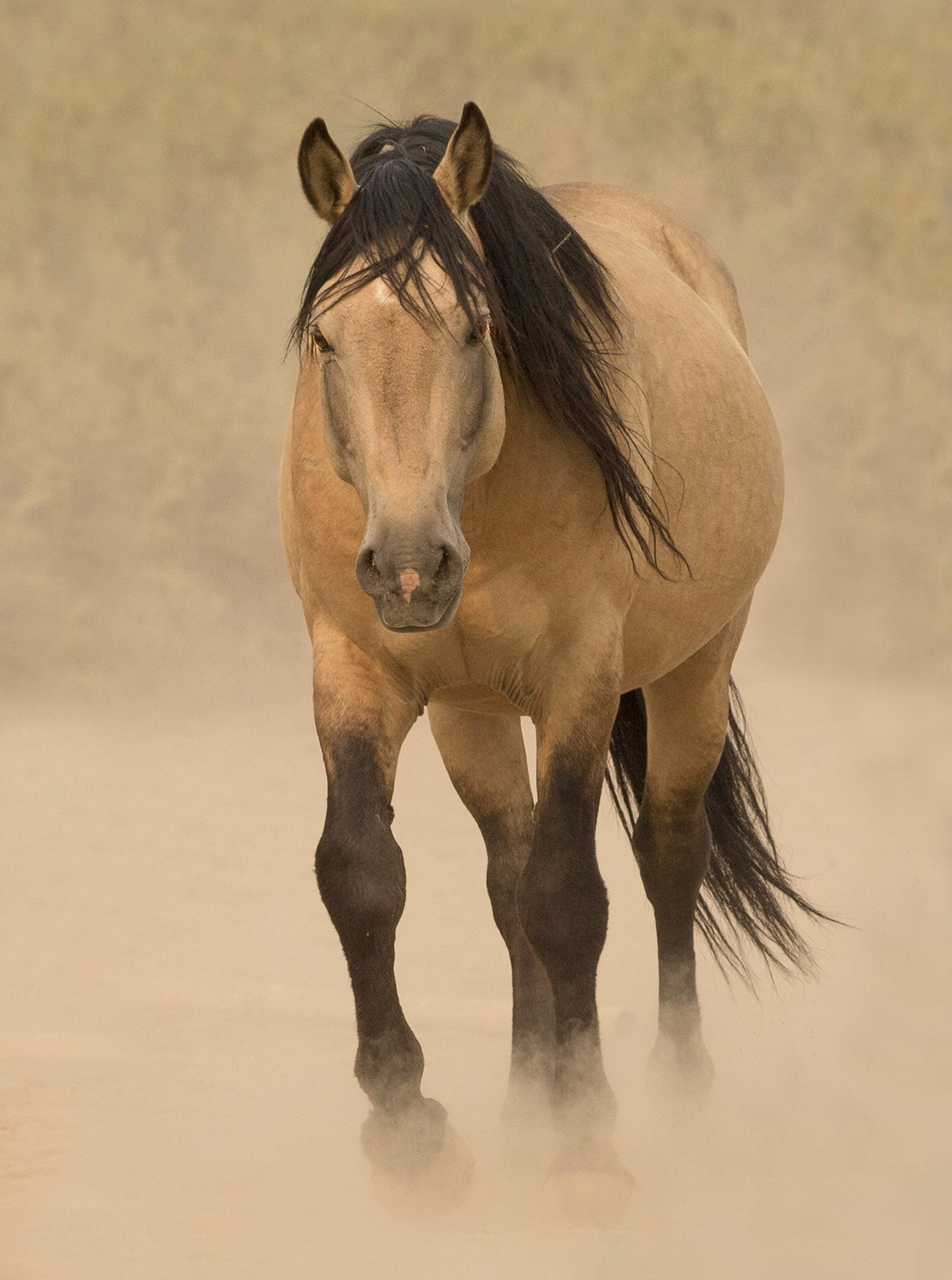 Out Of The Dust By Carol Walker Color Photograph With Images Horses Mustang Horse Pretty Horses