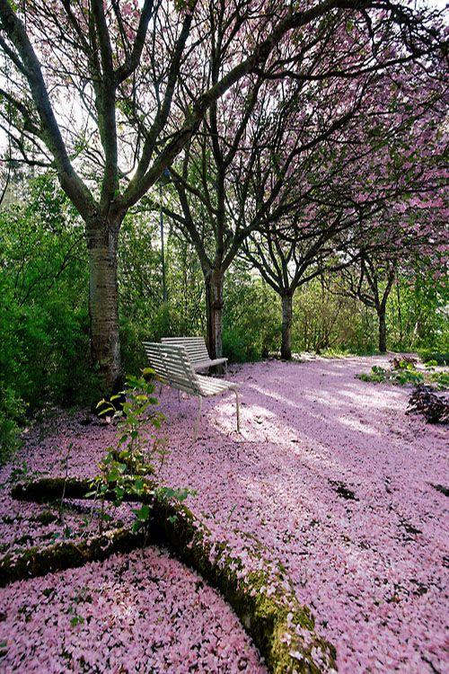 Cherry Tree Park, Södra Sandby by claustral