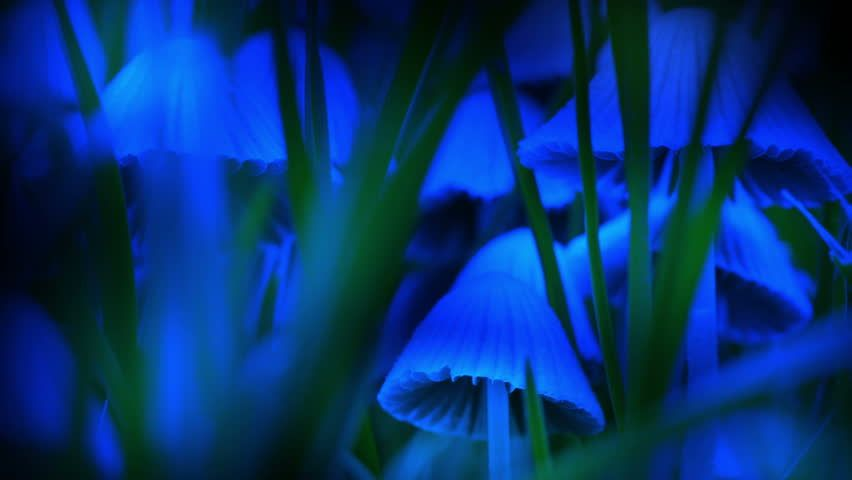 Blue Towering glowing blue mushrooms in grass psychedelic