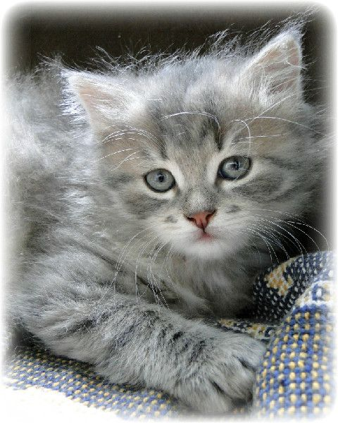 Da babyy animali kittens kittens cutest e cute cats for Buongiorno con gattini