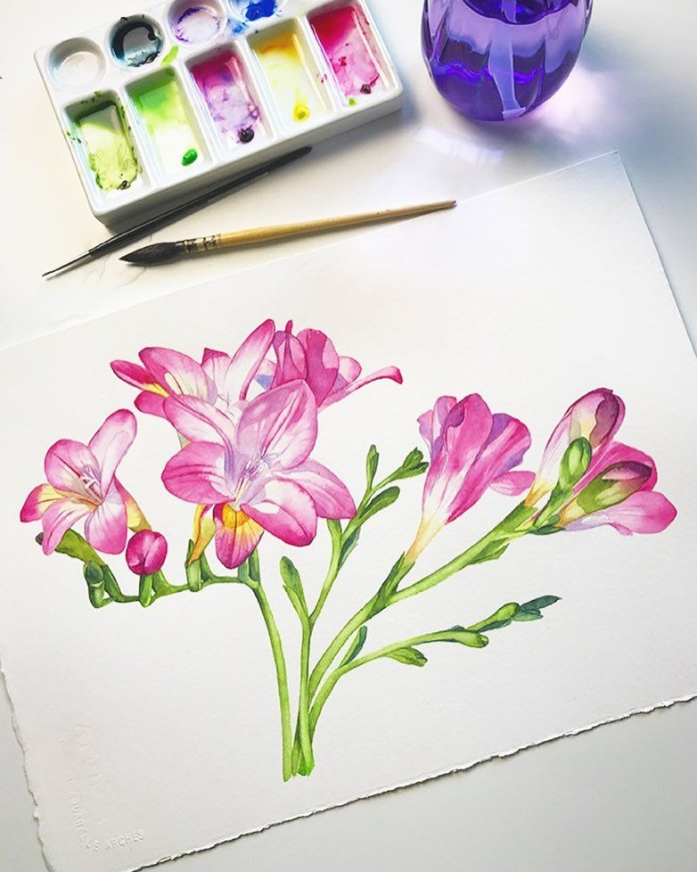 Here Are My Watercolour Freesias I Have A Day At My Computer Planned Today So Much I Need To Do So Much I Flower Drawing Flower Art Botanical Sketchbook