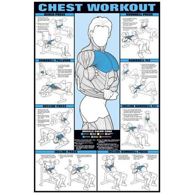 Chest Workout Poster Weight Lifting Exercises Chart Workouts