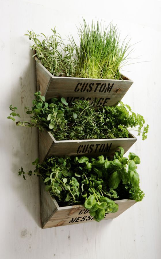 personalised large wall mounted herb planter kit with on indoor herb garden diy wall vertical planter id=41536